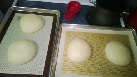 two loaves made with bread flour and all-purpose and two will whole wheat and all-purpose