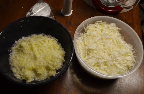 The bowl on the right is the saurkraut before squeezing it and wilting with salt and the one on the left is after! They both started with the same volume! After this step the cabbage is packed into jars to ferment!